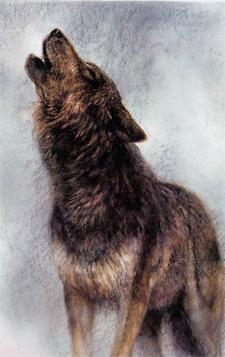 Wolf door Rien Poortvliet