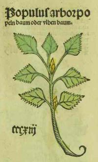 ulbenbaum